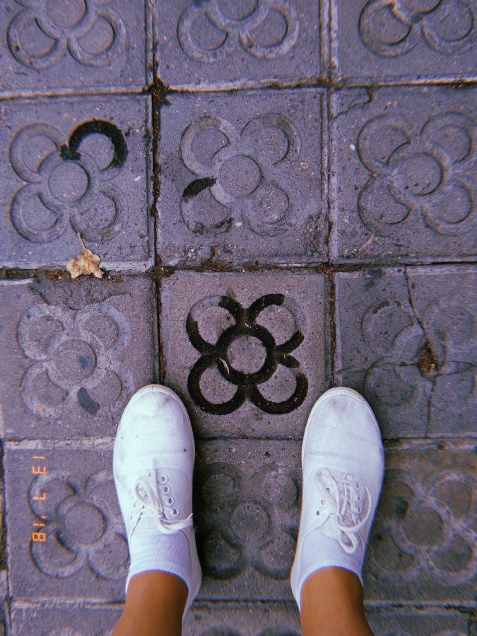 La flor o panot de Barcelona es un icono de la ciudad