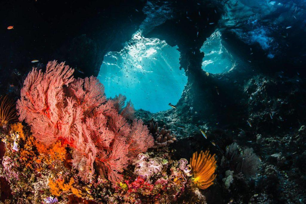 buceo para ver corales en Indonesia